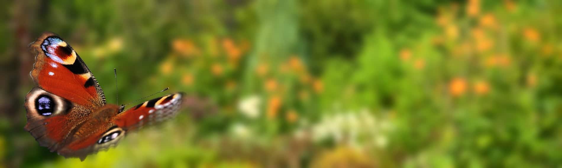 jol-slider-fotolia_106562745_m-min