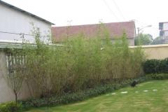 15_Bambus_schnelles-Wachstum
